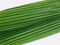 Close up das palmas da folha Imagens de Stock