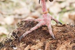 Close up das patas de um pássaro Imagem de Stock