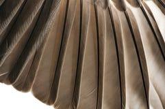 Close up das penas de pássaro Imagem de Stock Royalty Free