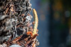 Close up das plântulas que crescem fora da árvore foto de stock