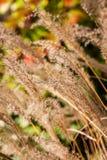 Close up das plantas em um parque Fotos de Stock Royalty Free