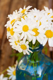 Close up of dasy flowers posy. Close up of fresh dasy flowers posy royalty free stock image