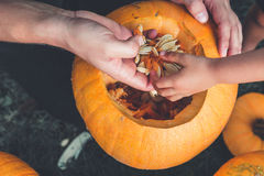 Close up of daughter and father hand who pulls seeds  fibrous material from  pumpkin before carving for Halloween. Prepares  jack- Royalty Free Stock Image