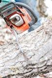 Close-up de árvores e de lenha do corte da serra de cadeia para o inverno Imagem de Stock