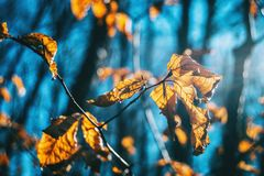 Close-up de algumas folhas de outono em um ramo fotografia de stock royalty free