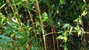 Close-up de bambu da floresta com vento filme