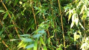 Close-up de bambu da floresta com vento video estoque