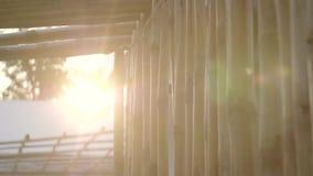 Close up de bambu da parede
