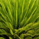 Close-up de bovenkant van een palm Royalty-vrije Stock Afbeelding