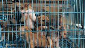 Close-up de cachorrinhos tristes no abrigo atrás da cerca que espera para ser salvado e adotado à casa nova Abrigo para animais video estoque