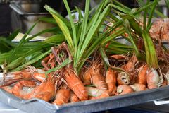 Close up de camarões deliciosos do rei em um mercado local do chatuchak do mercado do alimento da rua em Tailândia, Ásia Fotos de Stock