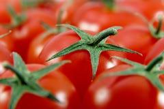 Close up de Cherry Tomatoes Imagem de Stock