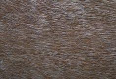 Close up de couro da textura da pele, cavalo fotografia de stock royalty free