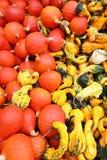 Close up de diversas abóboras em formulários e em cores diferentes em um mercado imagens de stock