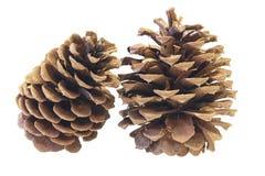 Close up de dois cones do pinho Imagem de Stock