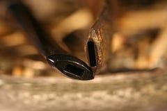 Close up de duas bacias de tubulação Imagem de Stock Royalty Free