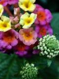 Close-up de flores coloridas imagens de stock royalty free