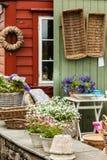 Close up de flores cor-de-rosa brancas bonitas, margaridas Imagens de Stock