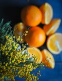 Close-up de flores da mimosa com as laranjas frescas no fundo, vista superior foto de stock royalty free
