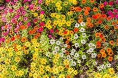 Close up de florescência das flores Imagem de Stock Royalty Free