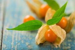 Close-up de frutos do Physalis foto de stock