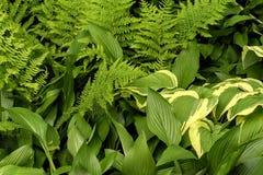Close up de grande, de pequeno, largamente e as folhas do verde longo Imagem de Stock