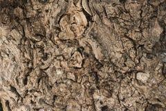 Close-up de madeira velho da textura, fundo abstrato Imagens de Stock