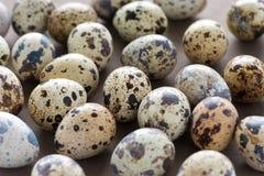Close up de ovos de codorniz Imagem de Stock
