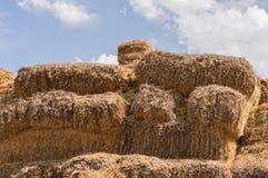 Close-up de pacotes de feno em uma vila Pilhas secas do feno na cena rural Foto de Stock Royalty Free
