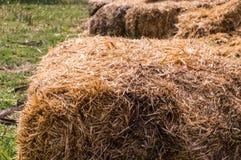 Close-up de pacotes de feno em uma vila Pilhas secas do feno na cena rural Fotografia de Stock