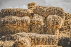 Close-up de pacotes de feno em uma vila Pilhas secas do feno na cena rural Imagem de Stock