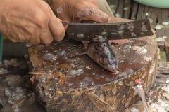 Close-up de peixes do corte do trabalhador em uma placa Imagem de Stock