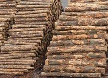 Close up de pilhas da madeira em Napier, Nova Zelândia Imagem de Stock