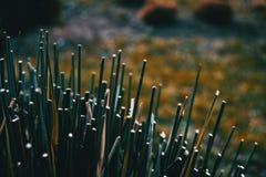 Close-up de plantas cortadas foto de stock royalty free