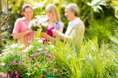 Close-up de plantas de jardim na casa verde Imagens de Stock