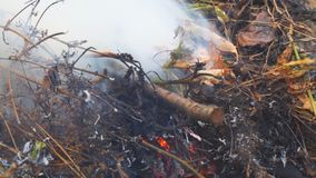 Close-up de queimadura da grama vídeos de arquivo
