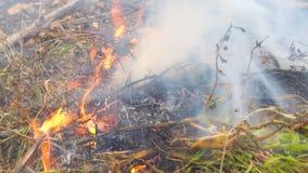 Close-up de queimadura da grama filme