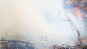 Close-up de queimadura da grama seca video estoque