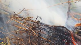 Close-up de queimadura da grama video estoque