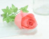 Close-up de Rosa Imagem de Stock