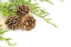 Close up de três decorações do cone do pinho e farelos dourados do pinheiro Imagens de Stock