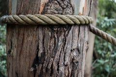 Close up de tronco de árvore textured atado com corda fotografia de stock royalty free