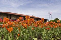 Close up de tulipas alaranjadas e vermelhas com o chalé Montagem-real histórico no fundo imagem de stock royalty free