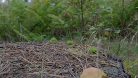 Close-up de um cogumelo amarelo que cresce sobre o tronco de uma árvore cortada, no meio de uma madeira verde Após a câmera as ba filme