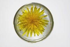 Close-up de um dente-de-leão amarelo em um frasco de vidro Foto de Stock