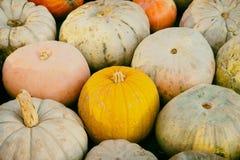 Close-up de um fundo natural sazonal de diversas abóboras, cena rural Conceito da colheita, ação de graças, Dia das Bruxas Imagens de Stock