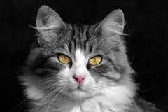 Close-up de um gato bonito Foto de Stock