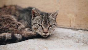 Close-up de um gato com uma cara triste Animal desabrigado Abrigo do gato vídeos de arquivo