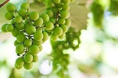 Close-up de um grupo de uvas Fotos de Stock