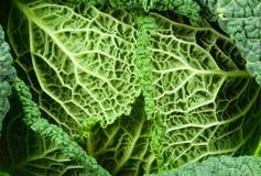 Close-up de um kale Imagens de Stock Royalty Free